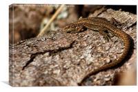 Sunbathing Lizard, Canvas Print