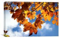 Fall Leaves, Canvas Print