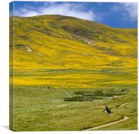 Spring landscape, California Poppy Reserve, Canvas Print