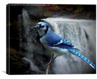 Blue Jay, Canvas Print