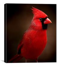 Male Northern Cardinal Portrait, Canvas Print