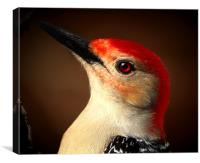 Red Bellied Woodpecker, Canvas Print