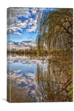 Willow reflection, Canvas Print