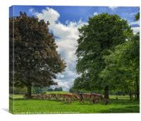 Deer grazing, Canvas Print
