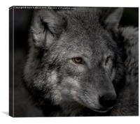 Lone wolf , Canvas Print