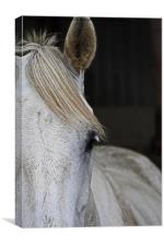 Portrait of Horse, Canvas Print