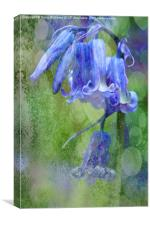 Bluebell Textures, Canvas Print