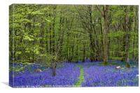 Path through the bluebells, Canvas Print
