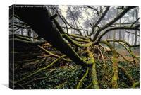 The Fallen Tree I, Canvas Print