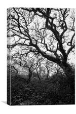 Gothic Woods II, Canvas Print