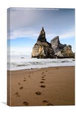Bear's Beach IV, Canvas Print