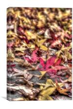 Red and yellow leafs, Canvas Print