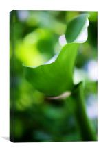 Fifty shades of Green, Canvas Print