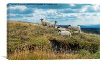 Flock of sheep, Canvas Print