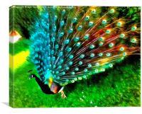 Peacock in Splendour!, Canvas Print