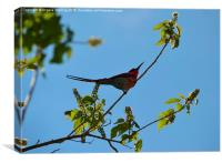African Bee Eater, Canvas Print