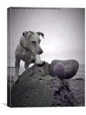 Jack Russell knocking down my art., Canvas Print