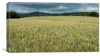 Overlooking Ledbury in Herefordshire., Canvas Print