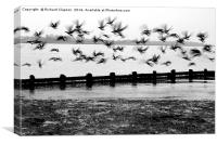 Flying Geese, Canvas Print