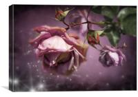 Dusky Pink Roses, Canvas Print