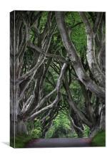Dark hedges, Canvas Print