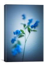 Gentle Touch, Canvas Print