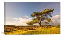 One Tree , Canvas Print