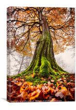 The Power of Roots, Canvas Print