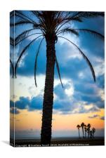 Palms on a Beach, Canvas Print