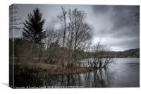 Dreamy trees near lake, Canvas Print
