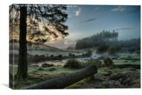Early Dartmoor Bellever forest, Canvas Print