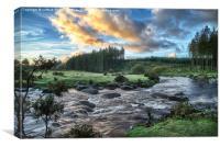 Dartmoor Bellever Forest, Canvas Print