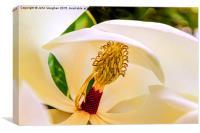 Creamy Magnolia, Canvas Print
