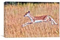 Frolicking Fallow Fawn, Canvas Print