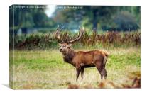King of the Rut, Canvas Print