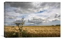 Clouds over Wheat Field, Canvas Print