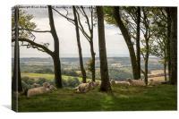 Sheep on Chanctonbury Ring, Canvas Print