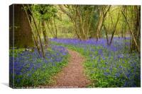 Clapham Woods Bluebells, Canvas Print