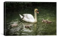 Mute Swan With Cygnets, Canvas Print