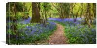Clapham Wood Bluebells, Canvas Print