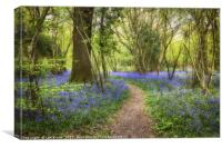 Clapham Wood Bluebells, Canvas Print