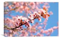 Spring cherry blossom and blue sky, Canvas Print