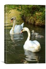 Swans on Southwater lake, Canvas Print