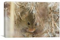 Mouse Nest, Canvas Print