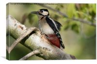 Woodpecker , Canvas Print