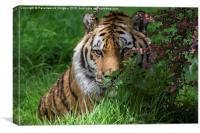 Tiger in Bloom, Canvas Print