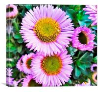 Sunset in a flower, Canvas Print
