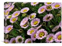 Buzzing in the Flowers, Canvas Print