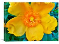 Mellow Yellow, Canvas Print