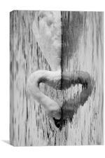 heart swan reflection, Canvas Print